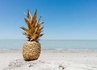 Ananas: da dove proviene? | SD Fruit - ingrosso ortofrutta